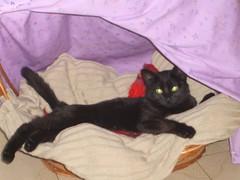Sofí5 (Melodie Parga Otero) Tags: gatita