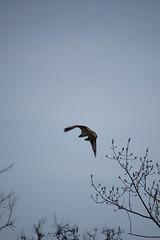 (Photo Phiend) Tags: fish bird newjersey nj sandyhook gatewaynationalrecreationarea