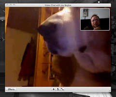 Video Chat with Clyde