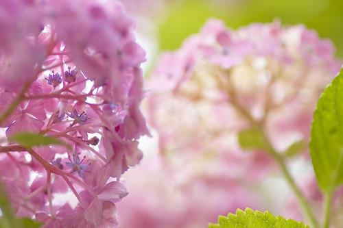 blooming**