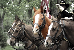 Horses in muted color (zyrcster) Tags: horses cutout colorado coloradosprings edit muted evergreencemetery memorialday2008 photofaceoffwinner photofaceoffplatinum pfogold