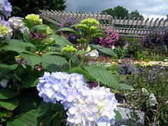gardenshop3