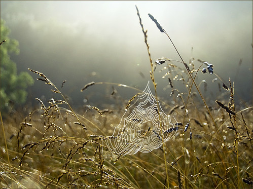 June Pasture Early Morning Web