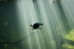 out of the light (Pfenya) Tags: light berlin zoo turtle zooberlin efs60mmf28macrousm goldenvisions aquariummacro