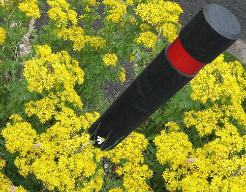 Post under ragwort