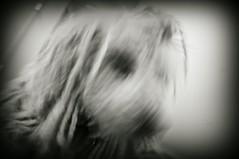 bad hair day (mudpig) Tags: dog motion blur geotagged cord shot mug blizzard rasta dred komondor mudpig stevekelley