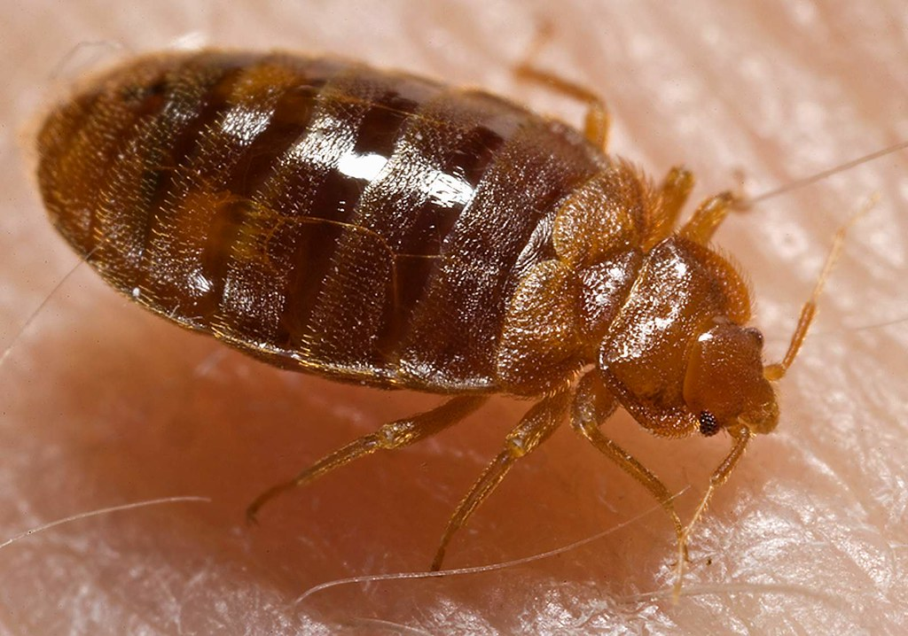 Halloween 2020 Sheepshead Ua Bed Bugs At The UA? Not Really. Here's The Whole Story   BKLYNER