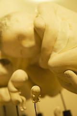 Origins (dai oni) Tags: baby nikon birth pregnancy science foetus 2470 foetuses d700