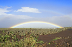 Rainbow near Makawao 00002