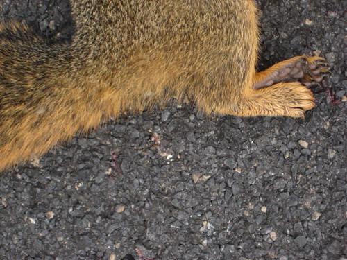 Bear Creek Squirrel