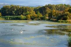 Agias Lake on the Greek island of Crete (Peace Correspondent) Tags: autumn lake d50 geese kreta ducks greece crete hania waterfowl freshwater xania chania kriti agia lakescape greekisland views50 views100 5photosaday views75 views25 neakydonia lakeagias