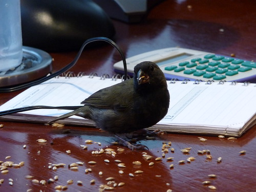 "-""You crunch the numbers, I'll crunch the birdseed"""