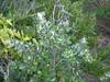 Plant 1 (cobalt.penguin) Tags: beach dunes sydney peninsula avalon barranjoey