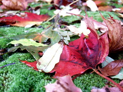 Fallen Leaves (by David Masters)