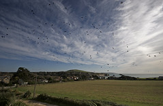 Counting Crows, Freshwater Bay, Isle of Wight (s0ulsurfing) Tags: ocean blue light sea sky cloud sunlight green bird beach water field grass weather birds clouds island bay coast skies bright wind patterns flight wide wideangle coastal vectis isleofwight coastline crow gliding rook crows raven 2008 isle ravens soar wight cirrus freshwater cacophony glide westwight 10mm corvuscorax corvus corvidae commonraven freshwaterbay passerine wipsy sigma1020 s0ulsurfing thecloudappreciationsociety