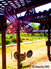 Butterfly Windchime (phil_sidenstricker) Tags: plants grass butterfly veranda windchime overhang donotcopy valleyofthesunphoenixmetro upcoming:event=981998 southmountainfarmphoenixazusa farmplants