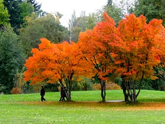 Promenade (Pierre♪ à ♪VanCouver) Tags: fall vancouver automne 秋 queenelizabethpark riceworld naturesfinest worldwidelandscapes flickrestrellas sofarsocute