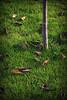 Vége van / It's over (Balázs B.) Tags: autumn tree green grass leaves canon leaf fourseasons fa ősz levél levelek canonef24105mmf4lisusm fű 40d