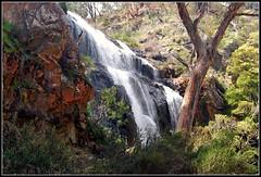 MacKenzie Falls (Scottmh) Tags: tree rock gum waterfall bush australian australia grampians victoria mackenziefalls zumsteins