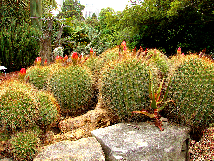 Royal Botanic Gardens Sydney - Succulent Garden (Image Heavy) 3009394895_7e53b8fc89_o
