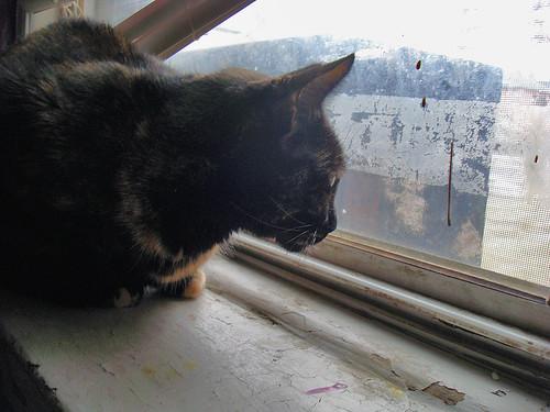 Moni at the Window