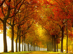 So Full (larsvandegoor.com) Tags: road autumn trees red sun green fall grass season boat thenetherlands row line  leafs  folliage  tellow    1000faves larsvandegoor thesecretlifeoftrees awetumn thesuperbmasterpiece vosplusbellesphotos jehebtzewelopeenrijtjehe obramaestra photocreativity