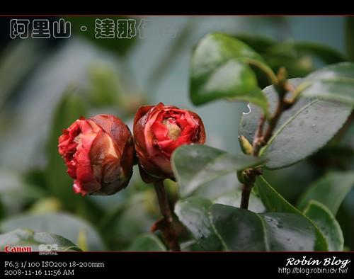 你拍攝的 20081116數位攝影_阿里山之旅282.jpg。