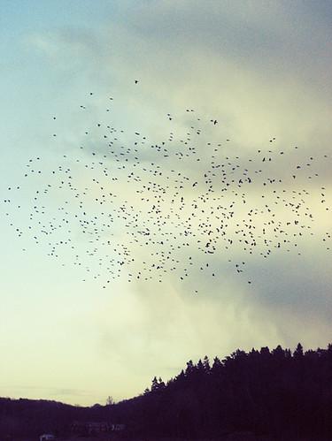 Ännu mer fåglar