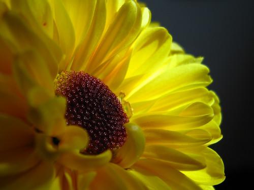 Balck & Yellow