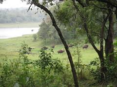 Periyar Tiger Reserve - Kerela