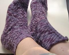 socks_maizy