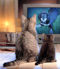 Moe watching cats (Mike's point of view) Tags: dog cats pets cat funny barrie kempenfeltbay simcoecounty barrieontario ultimateshot lmaoanimalphotoaward