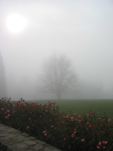 Council Crest Park in the fog