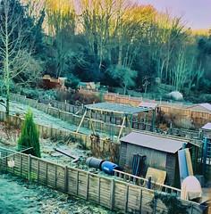 Symmetric Gardens (*Somerset.*) Tags: blue winter green fence garden hoarfrost symmetry symmetric gardenshed neighboursgarden winterly views25 25viewclub views2550 coveredwithfrost sunshinebehindtrees