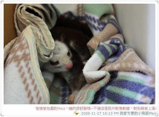 2008年11~12月份小飛鼠Meiz的生活照