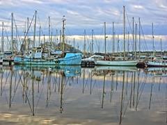 Seven Mute Swans meet a Coot & Mallard (flickrzak) Tags: reflections lancashire explore lancaster mallard hull masts coot muteswans glassondock