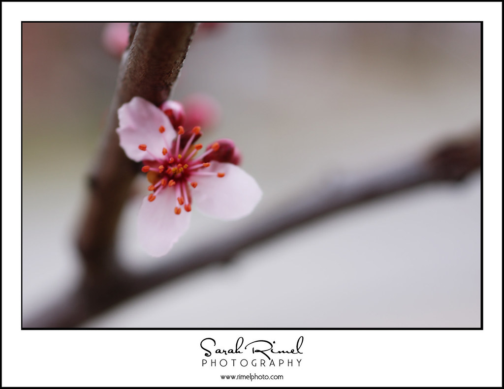 buds and blooms 12