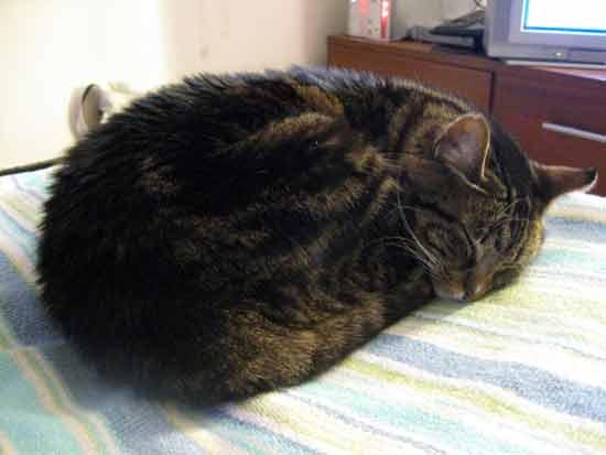 Sleeping Beanie