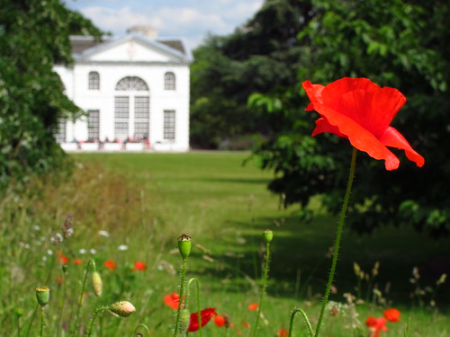 Poppies and the Orangery at Kew