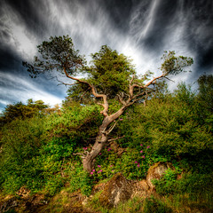 Tree and Sky (Grim Git) Tags: sky panorama tree castle vertical photoshop scotland cloudy dramatic westernisles grounds hdr isleoflewis lightroom stornoway outerhebrides lews photomatix tonemapped tonemapping vertorama nikond5000