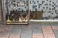 (Iyhon Chiu) Tags: cat 猫 ねこ 貓 西門町 2013