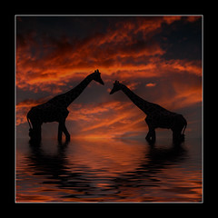 Two in Love (Andrea&Mike@Flickr) Tags: sunset water animals clouds sundown flood giraffen firstquality