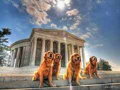 4 dogs and a memorial (Kris Kros) Tags: usa pet dogs photoshop four photography golden dc washington high memorial jon dynamic cs2 4 retriever kris jefferson range hdr kkg cs3 3xp firstquality photomatix kros nikographer kriskros kk2k abigfave 4dogsandamemorial friendscorner kkgallery