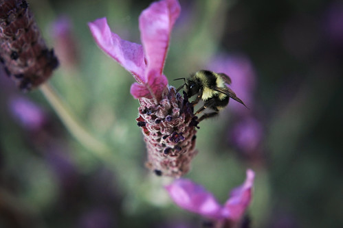 Same Bee, Different Angle