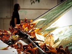 Otoño (Lolo · 100x100) Tags: auto hojas buenosaires árboles ciudad guillermo otoño lolo agustin hombre vereda vidrio pizarro parabrisas secas 100x100 guillermopizarro guillermoagustinpizarro lolo100x100