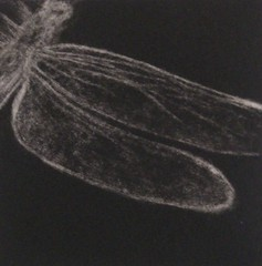 'Wings' - mezzotint on Flickr