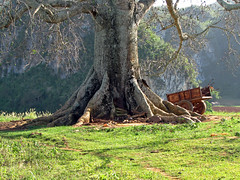 Tree with Wooden Cart
