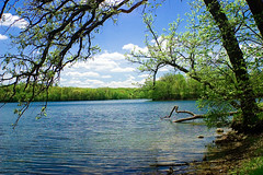 branches in the lake by uberculture on Flickr!