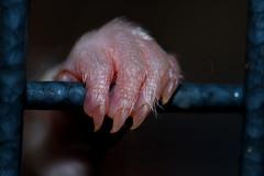 Emmett's Paw (KristyR929) Tags: pet macro paw rat explore rats macromondays