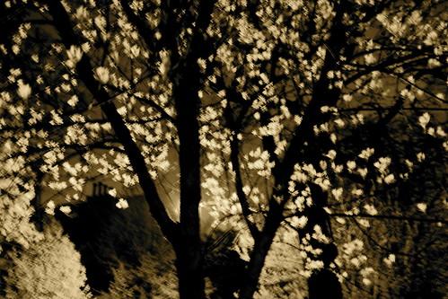 Spring sepia